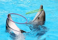 Visit Dubai Dolphinarium while on a Yacht Charter Vacation image