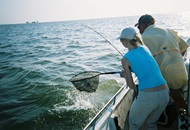 Tips for Your Fishing Trip on a Yacht Charter in Dubai image